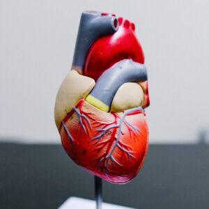 Maillen,  Rétrospective 2021 : Cardiologie